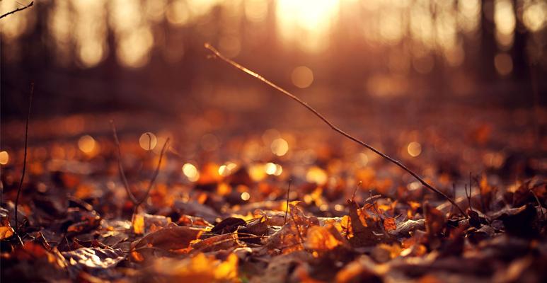 Itt az ősz! Ideje elővenni a Ryobi gépeket!